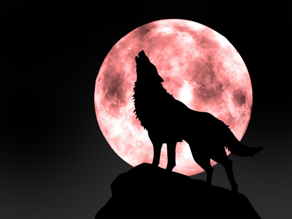 纯情夜夜狼