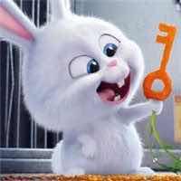 SONG兔子